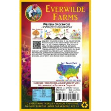Everwilde Farms - 1 Oz Western Spiderwort Native Wildflower Seeds - Gold Vault Bulk Seed Packet